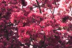 La primavera rosada soñadora florece fondo Imagen de archivo libre de regalías
