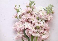 Acción rosada y flores blancas del jacinto Fotos de archivo libres de regalías