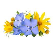 La primavera salvaje amarilla y azul florece el ramo aislado en el fondo blanco Fotos de archivo