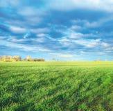 La primavera sistema in campagna, primi tiri di verde fotografie stock