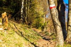 La primavera sta venendo nella valle Fotografia Stock