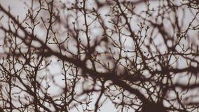 La primavera temprana ramifica haciendo el modelo interesante en el ` céntrico Alene Idaho de Coeur d Imagenes de archivo