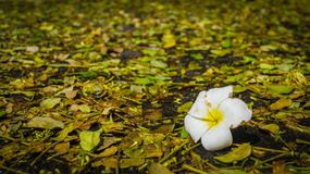 La primavera unturned Foto de archivo libre de regalías