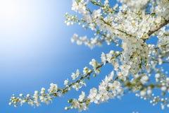 La primavera va piccoli fiori adorabili su al sole Fotografia Stock
