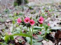 La primavera viene en rojo fotos de archivo libres de regalías