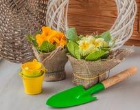 La primavera y pequeños amarillos empujan Foto de archivo