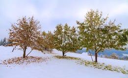La primera caída de la nieve Hojas del abedul amarillo en la nieve Foto de archivo libre de regalías