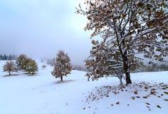 La primera caída de la nieve Hojas del abedul amarillo en la nieve Fotos de archivo libres de regalías