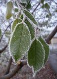 La primera nieve Fotografía de archivo