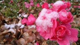 La primera nieve Foto de archivo