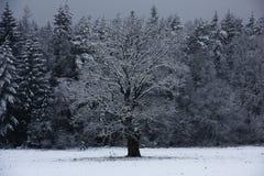 La primera nieve de este año Fotografía de archivo