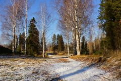 La primera nieve de un árbol de abedul se encendió por el abeto i de las sombras del azul del sol Imagen de archivo
