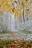 La primera nieve en el bosque del otoño Imagen de archivo libre de regalías