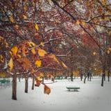 La primera nieve en el parque Imagen de archivo