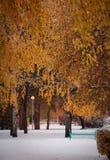 La primera nieve en el parque Fotografía de archivo libre de regalías