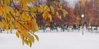 La primera nieve en el parque Foco selectivo Imagen de archivo