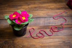 La primevère fleurit sur un plancher en bois avec amour d'inscription Photographie stock libre de droits