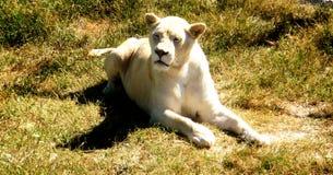 La principessa degli animali Fotografia Stock Libera da Diritti