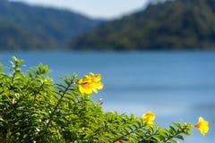 La priorità alta fiorisce con il grande fondo concreto della diga alla diga di Khundan Prakarnchol Immagine Stock Libera da Diritti