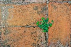 la priorità bassa colora la parete di pietra del grunge Immagini Stock