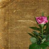 La priorità bassa di Grunge per il disegno con il colore rosa è aumentato Fotografie Stock Libere da Diritti