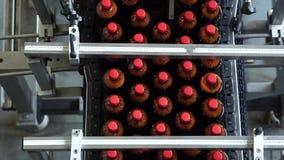 La producción de la banda transportadora de cerveza en botellas del plástico del ANIMAL DOMÉSTICO metrajes