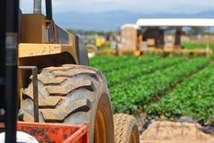 La produzione e la raccolta delle fragole vicino a Oxnard, California fotografia stock