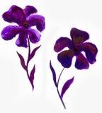 La progettazione floreale dell'estate con l'estratto dipinto a mano fiorisce i colori porpora su fondo bianco Immagine Stock Libera da Diritti