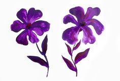 La progettazione floreale dell'estate con l'estratto dipinto a mano fiorisce i colori porpora su fondo bianco Fotografie Stock Libere da Diritti