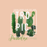 La progettazione grafica per la maglietta, modo del cactus tropicale d'annata dell'estate, stampa Immagine Stock
