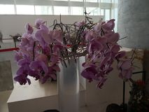 La progettazione rosa di arte del fiore a Pechino è aumentato manifestazione immagini stock