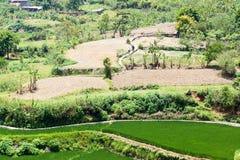 La promenade à travailler aux terrasses du riz Kapay-aw Photos stock
