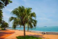 La promenade centrale avec des palmiers par la mer Kota Kinabalu, Sabah, Malaisie Photo libre de droits