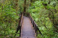 La promenade d'abîme - parc national de Fiordland image stock