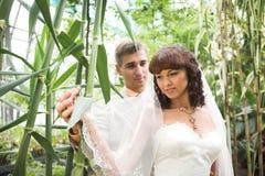 La promenade des nouveaux mariés Photos stock