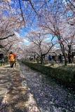 La promenade du philosophe, Kyoto Photographie stock