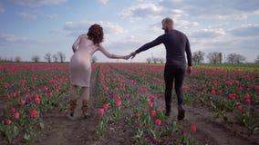 La promenade romantique, le jeune homme heureux et la femme tenant des mains marchent sur le gisement de fleur des tulipes rouges clips vidéos