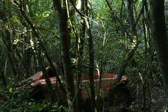 La propriété de la forêt photo libre de droits
