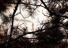 La prospettiva della foresta e dell'industria Immagine Stock