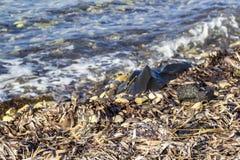 La prospettiva ha sparato delle conchiglie, pietre, moesses alla linea costiera fotografie stock libere da diritti