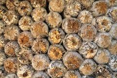 La protezione della segatura dell'azienda agricola del fungo Immagine Stock Libera da Diritti