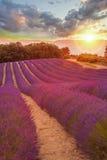 La Provence avec le gisement de lavande au coucher du soleil, région de plateau de Valensole dans les sud des Frances Image stock