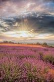 La Provence avec le gisement de lavande au coucher du soleil, région de plateau de Valensole dans les sud des Frances Photo libre de droits