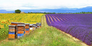 La Provence, France, campagne Photo stock