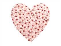 La prugna fiorisce il cuore II Immagini Stock