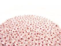 La prugna fiorisce il globo I Fotografie Stock Libere da Diritti