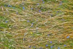 La publicación anual planta la cubierta floral del campo de granja Fotos de archivo