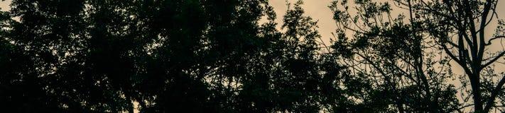 La puesta del sol al aire libre del fondo del negro de la sombra de la planta del árbol deja día de la rama de la silueta fotografía de archivo libre de regalías
