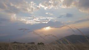 La puesta del sol asombrosa tiró muy bajo de la hierba amarilla en lanzamiento de la cámara lenta del paraglaider almacen de video