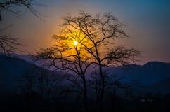 La puesta del sol con los árboles silueteados Imagen de archivo libre de regalías